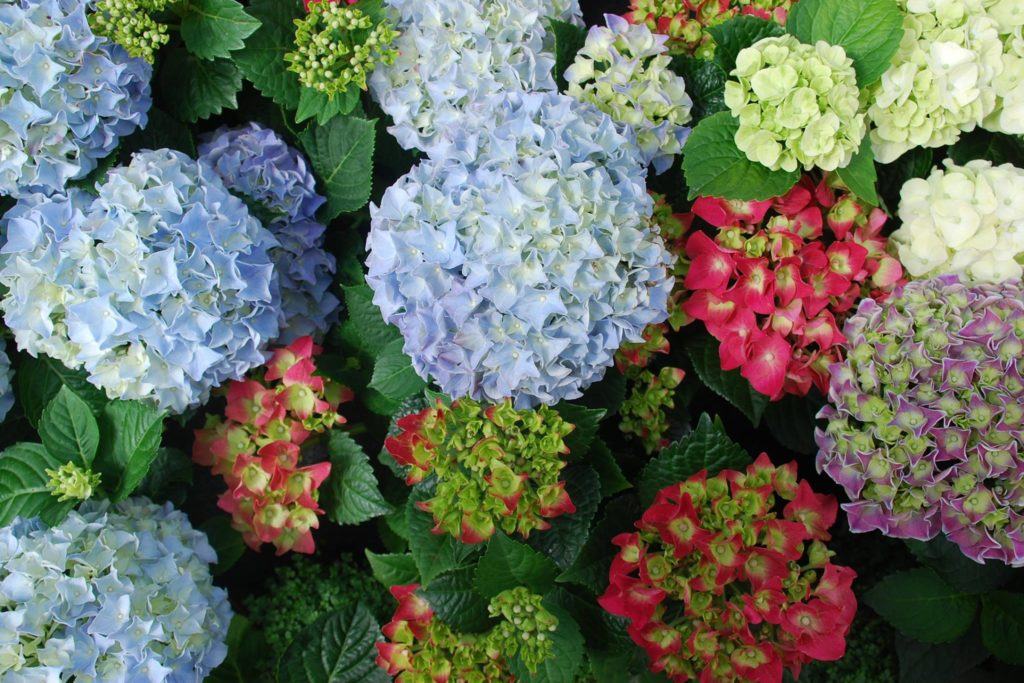 Imagen de Endanea Garden.