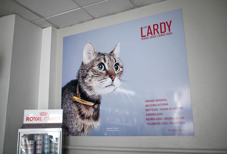 muselines-lardy-clinica-veterinaria-donostia-045
