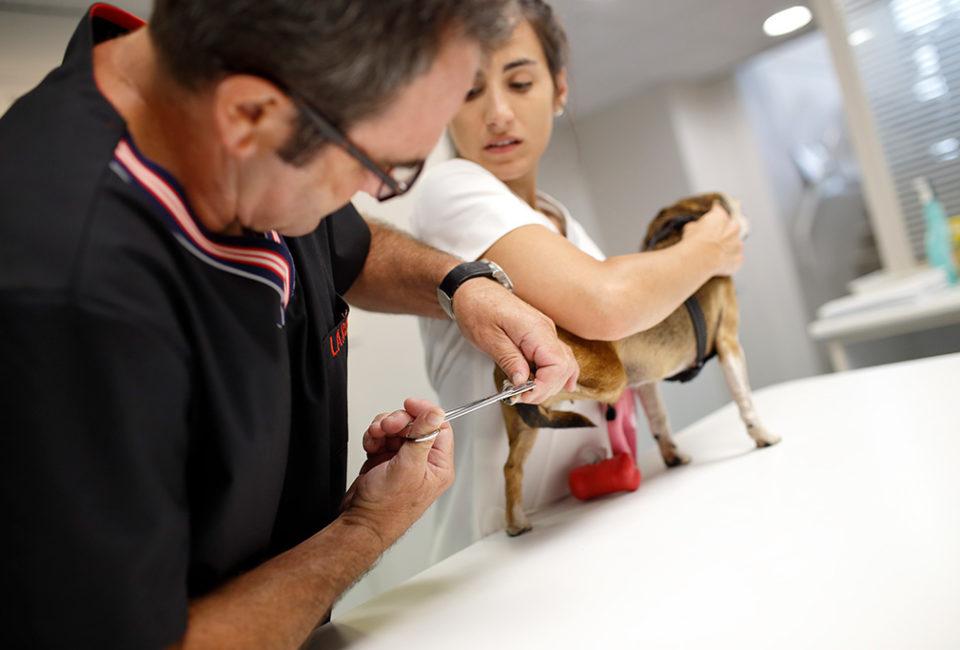 muselines-lardy-clinica-veterinaria-donostia-063